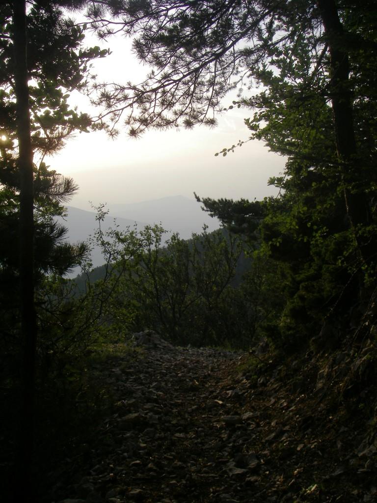 Un sentier comme on les aime, avec la lumière du matin, photo prise en me retournant car c'était pendant la montée !