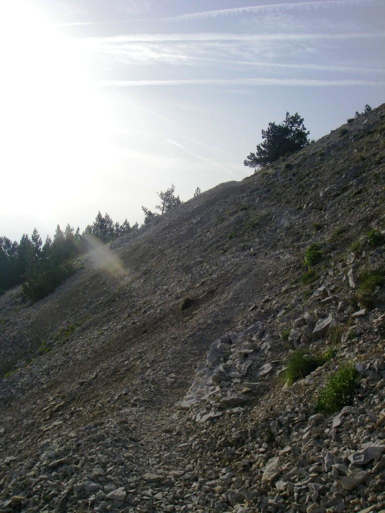 La végétation se fait plus rare à l'approche du sommet, et la pente se raidit ! Ça sent le sommet tout proche !